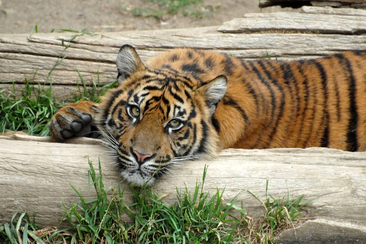 Kitty on a log
