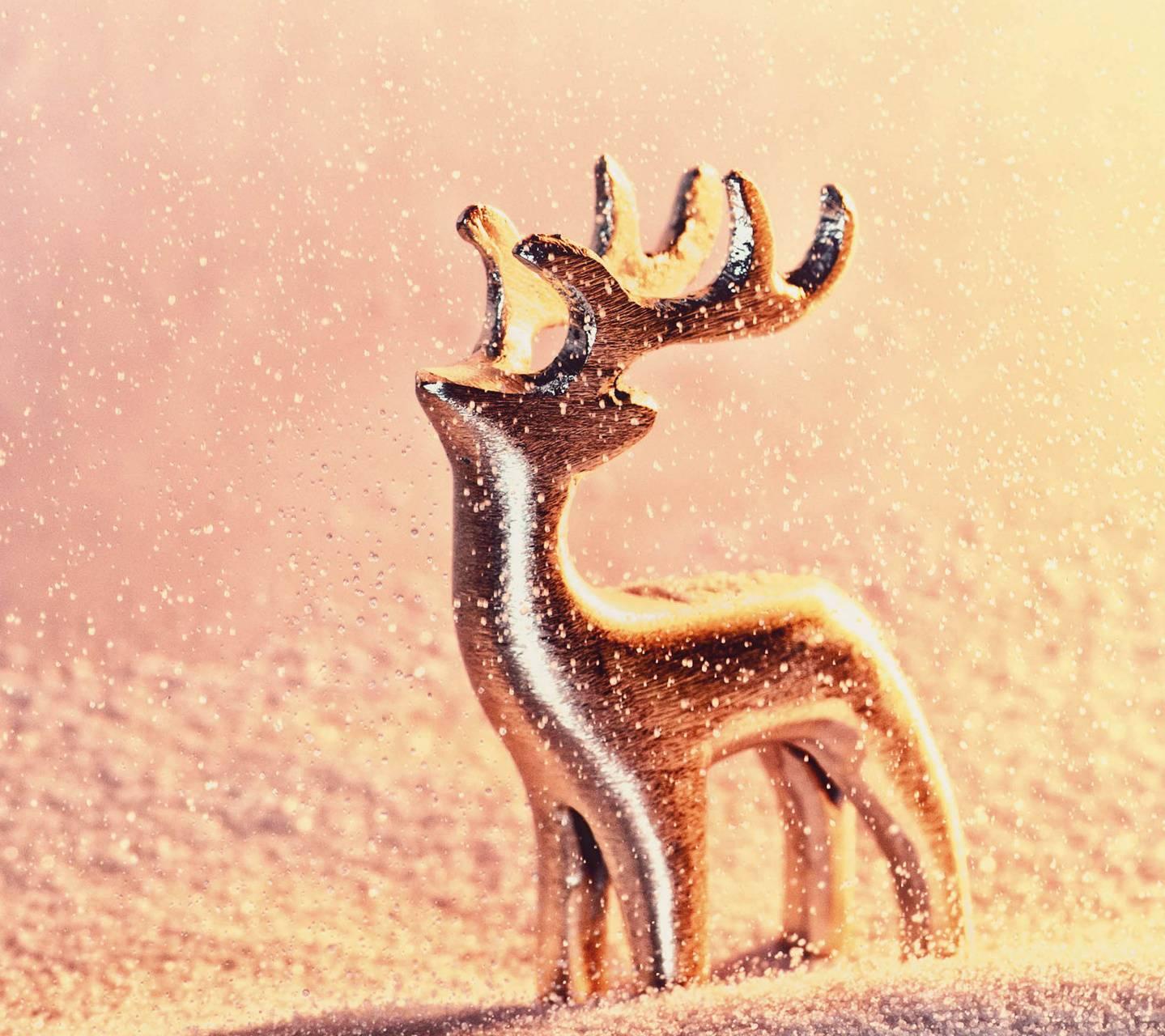 Reindeer of Light