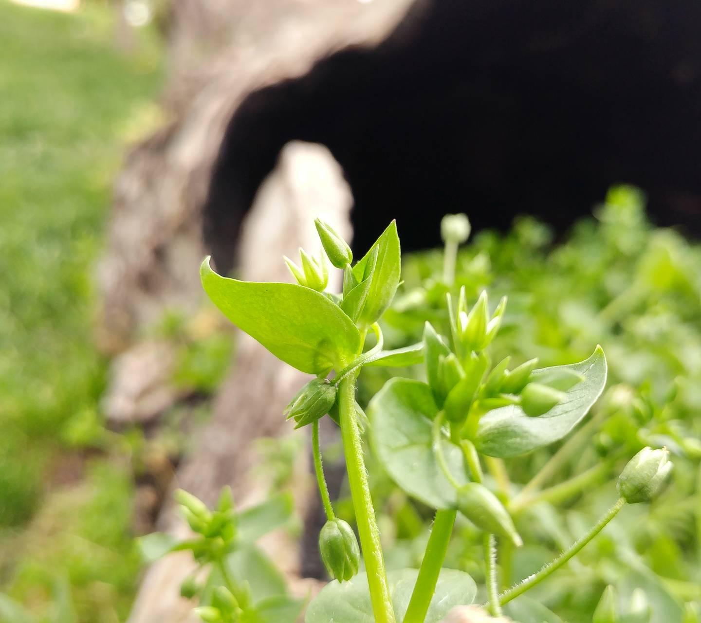 4zk Plant