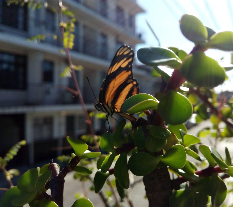 Butterfly in city