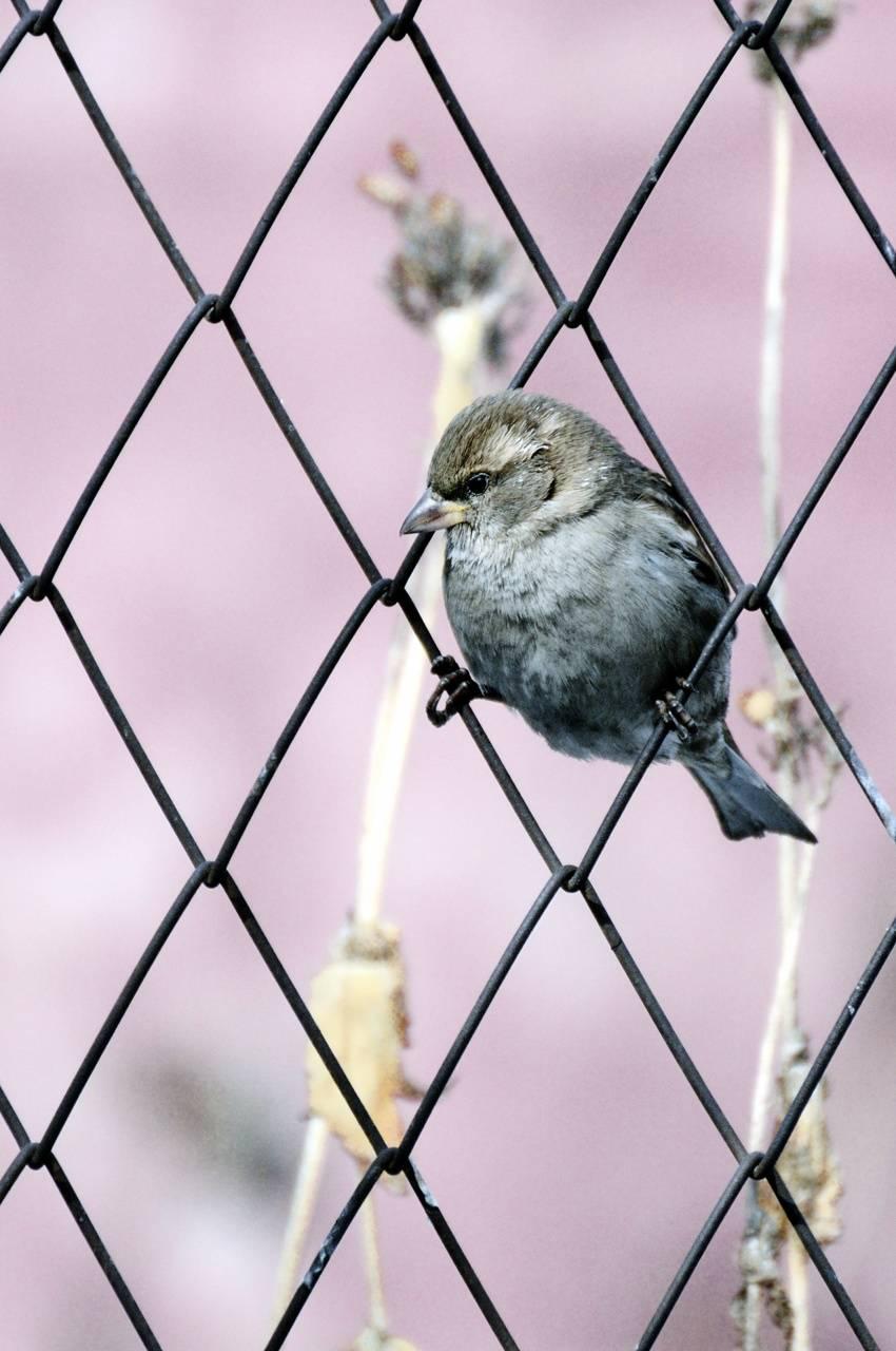 Bird Unchained