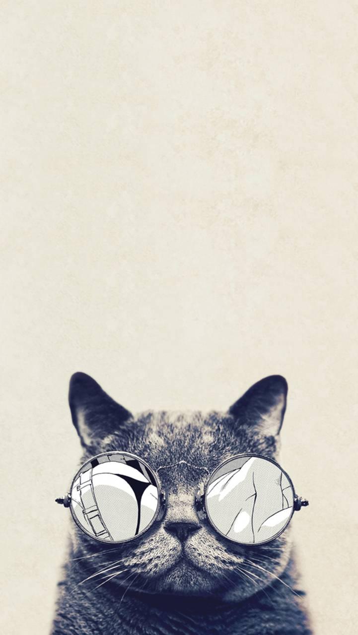 Cool Cat Glasses