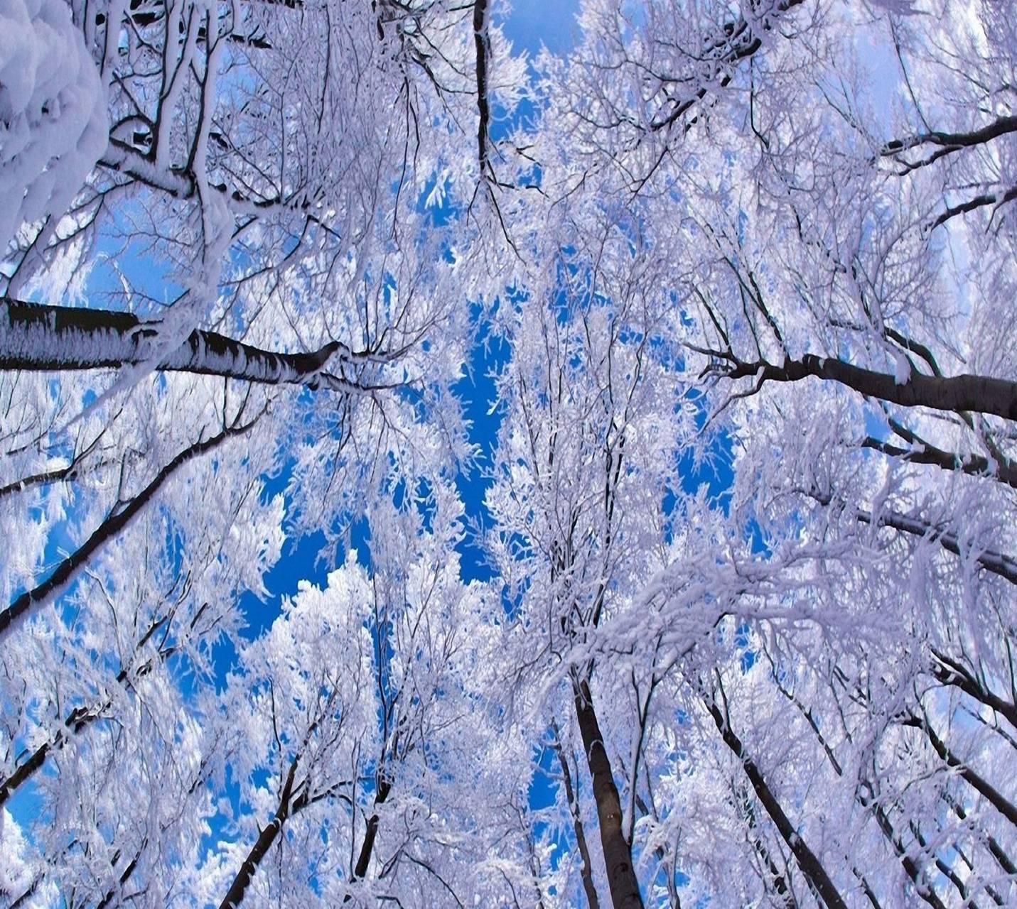 winter nevena