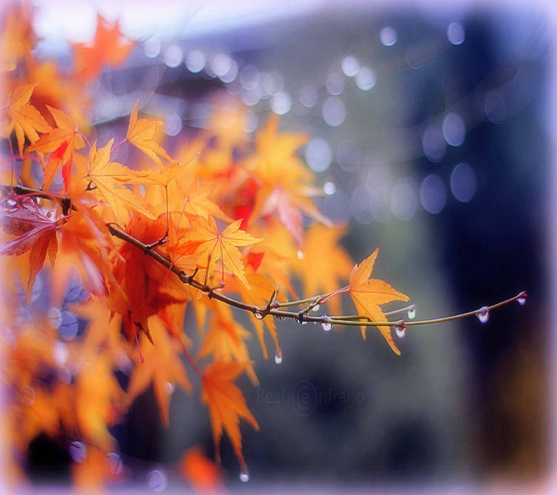 nature drops
