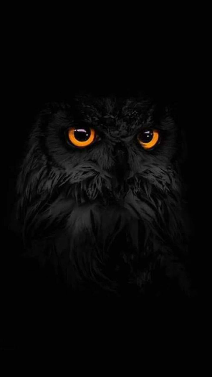 Black Owl Wallpaper By Fobaa 8a Free On Zedge
