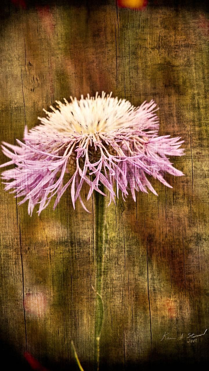 BSI Flower 01