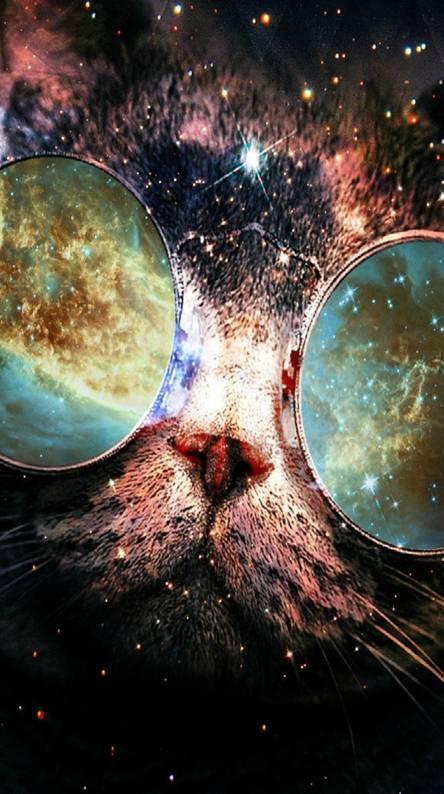 Galaxy cat