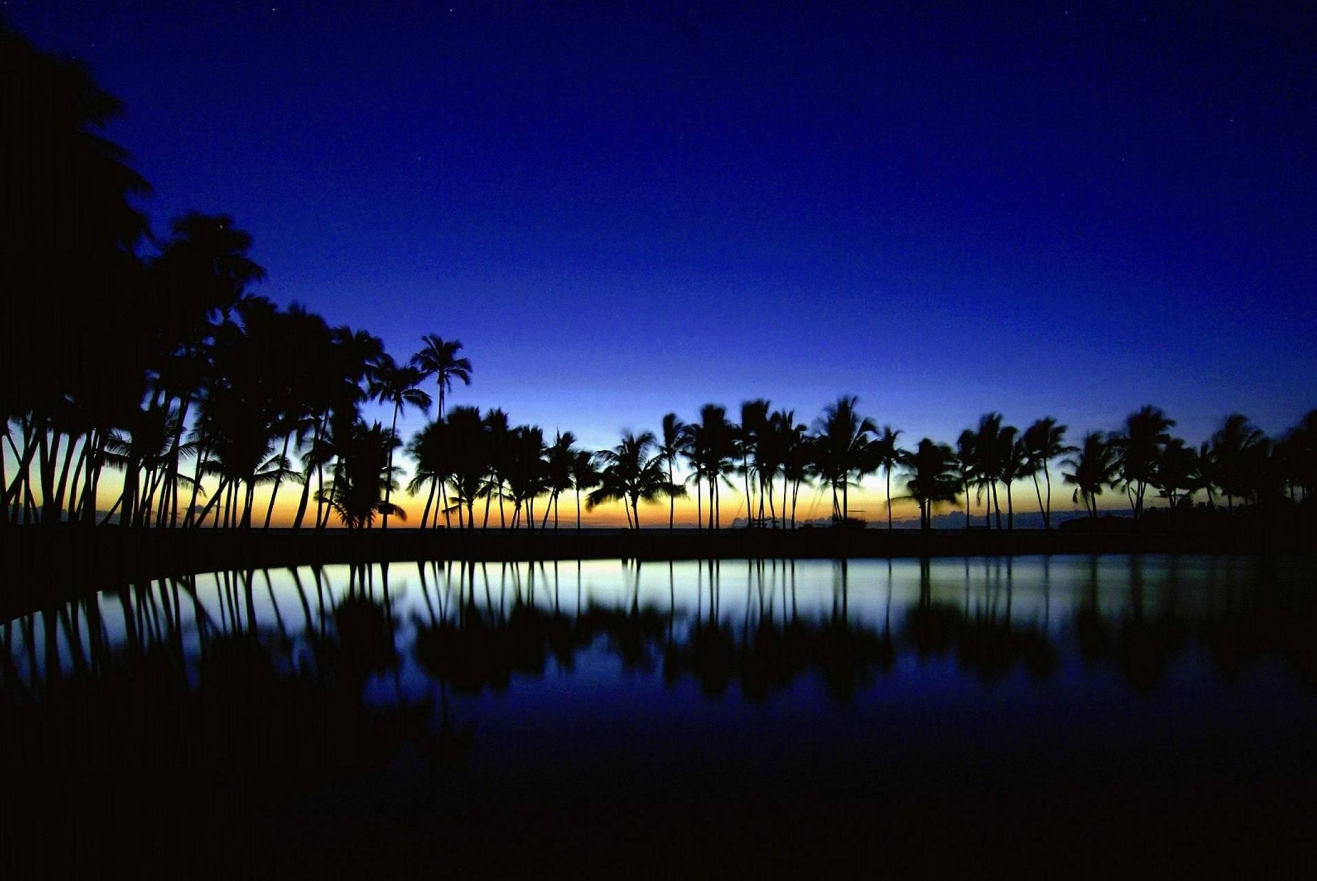 Beach Night Palms