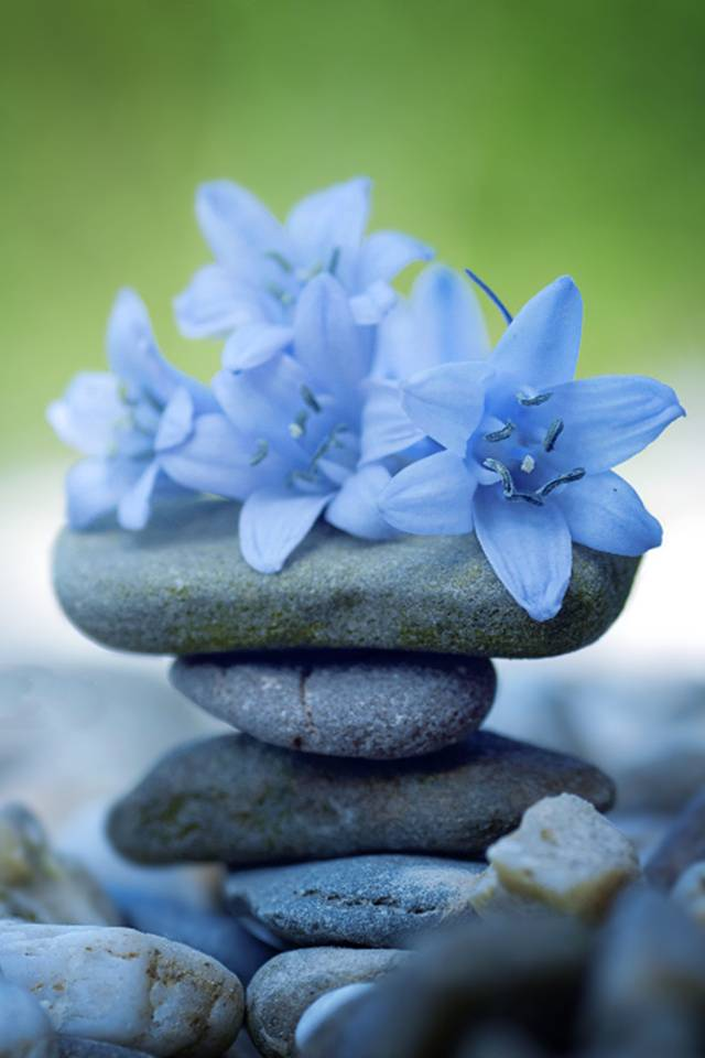 Zen Flowers