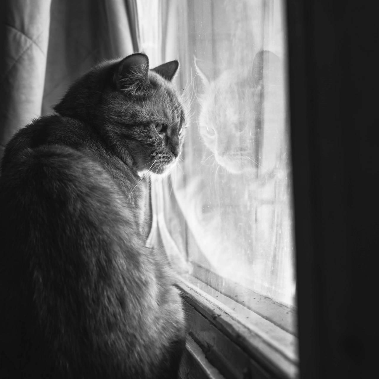 Moody Themed Cat