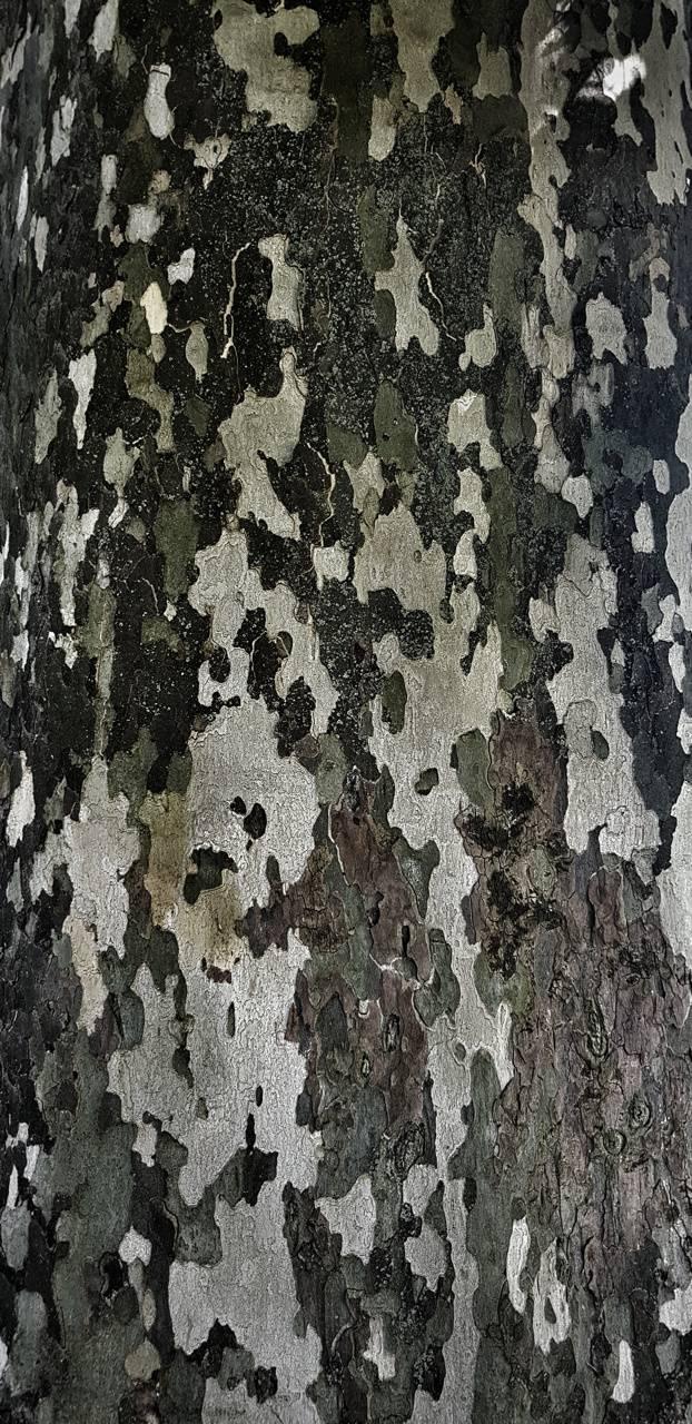 Camo Tree Bark