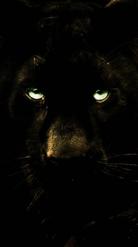 Black Lion Wallpapers