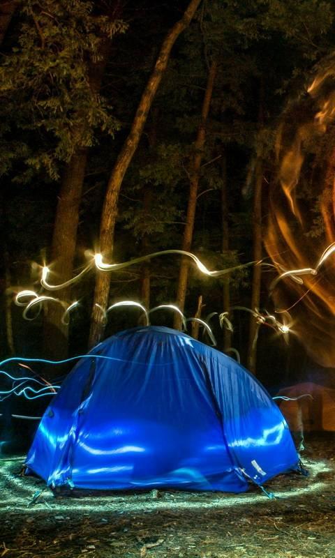 Forest Night Lights