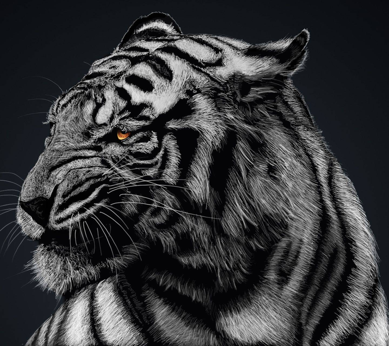 tiger bengala