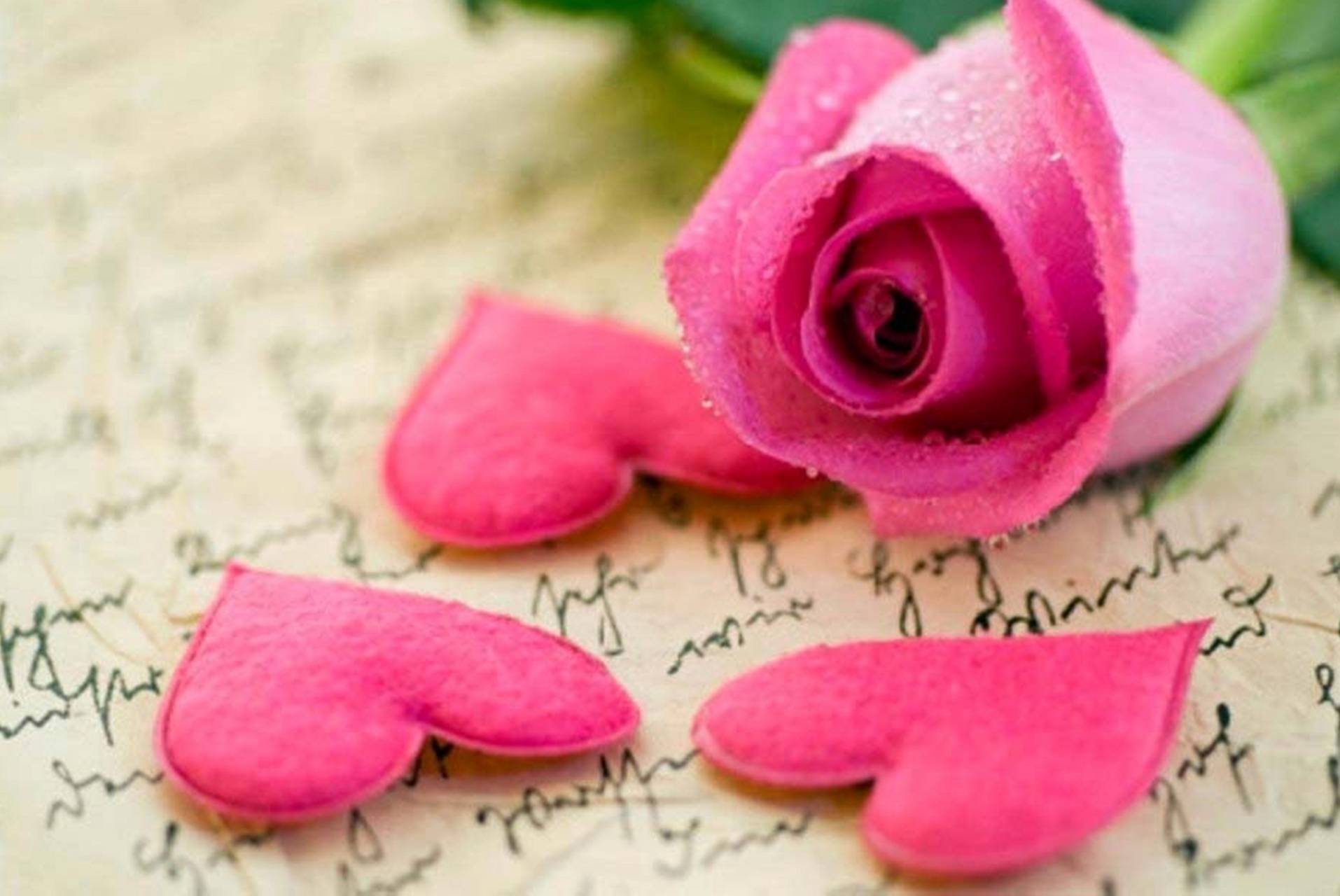 pink rose hearts