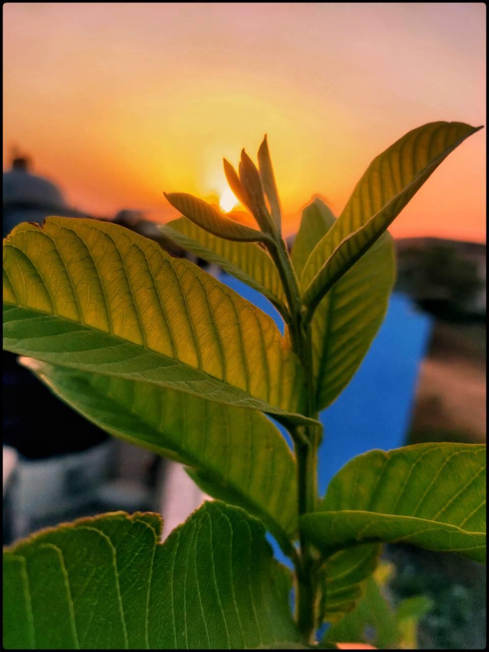 Leaf with sun