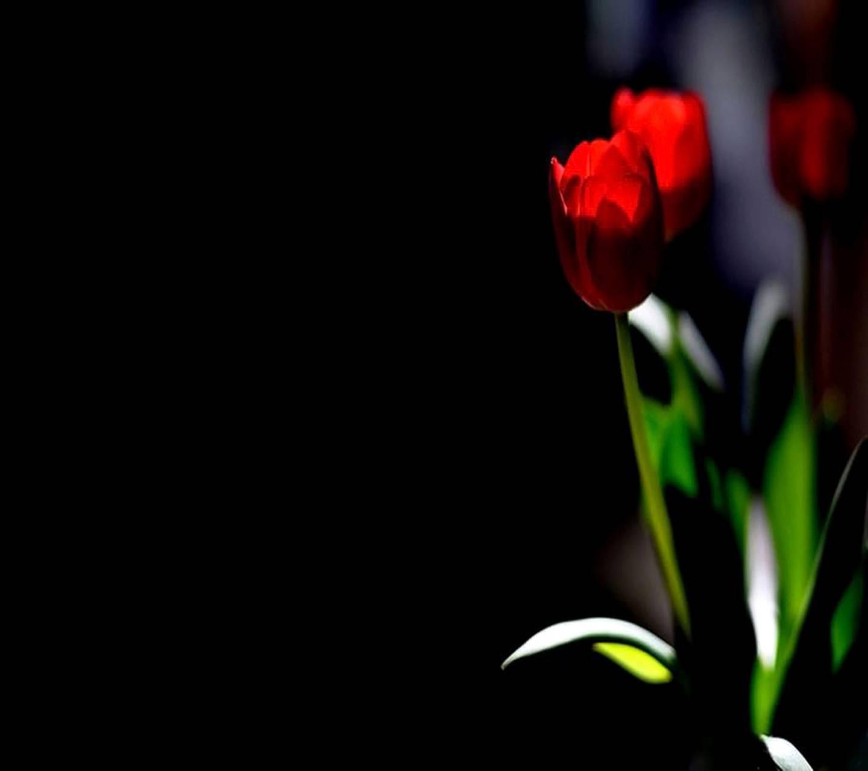 Beautiful Flowers