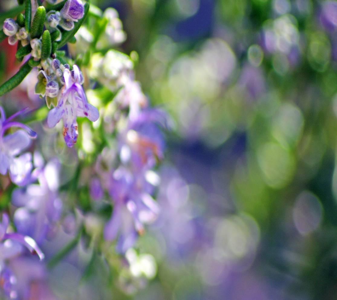 Flower Bokeh Defy