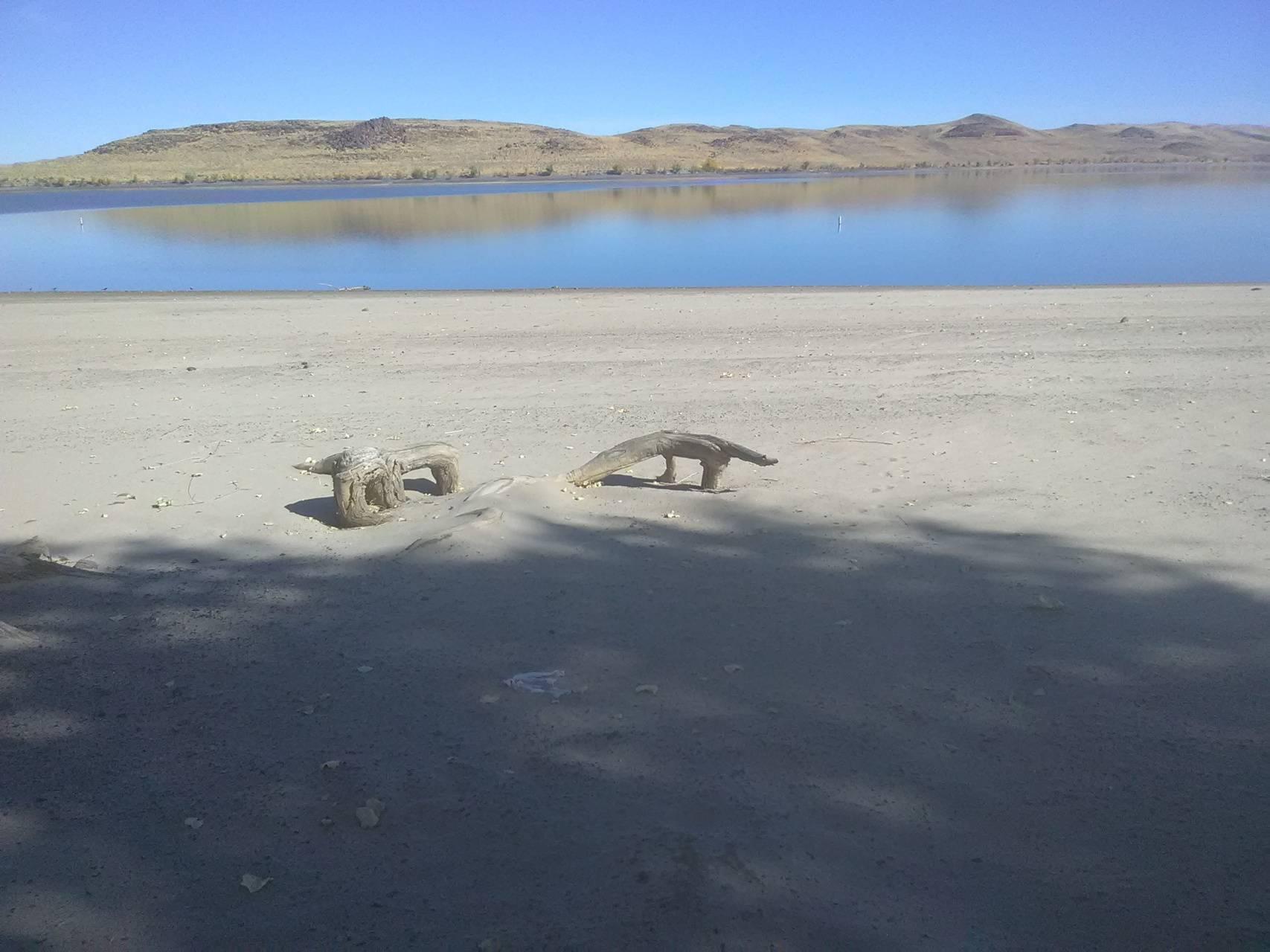 Dinos on the beach