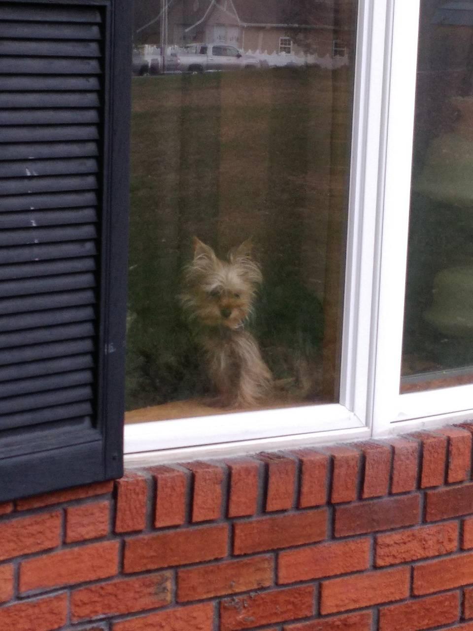 Puppy in window
