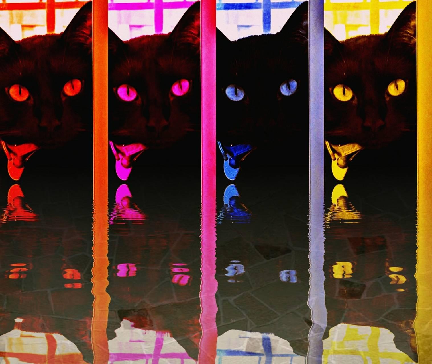 Rainbowblackcat2