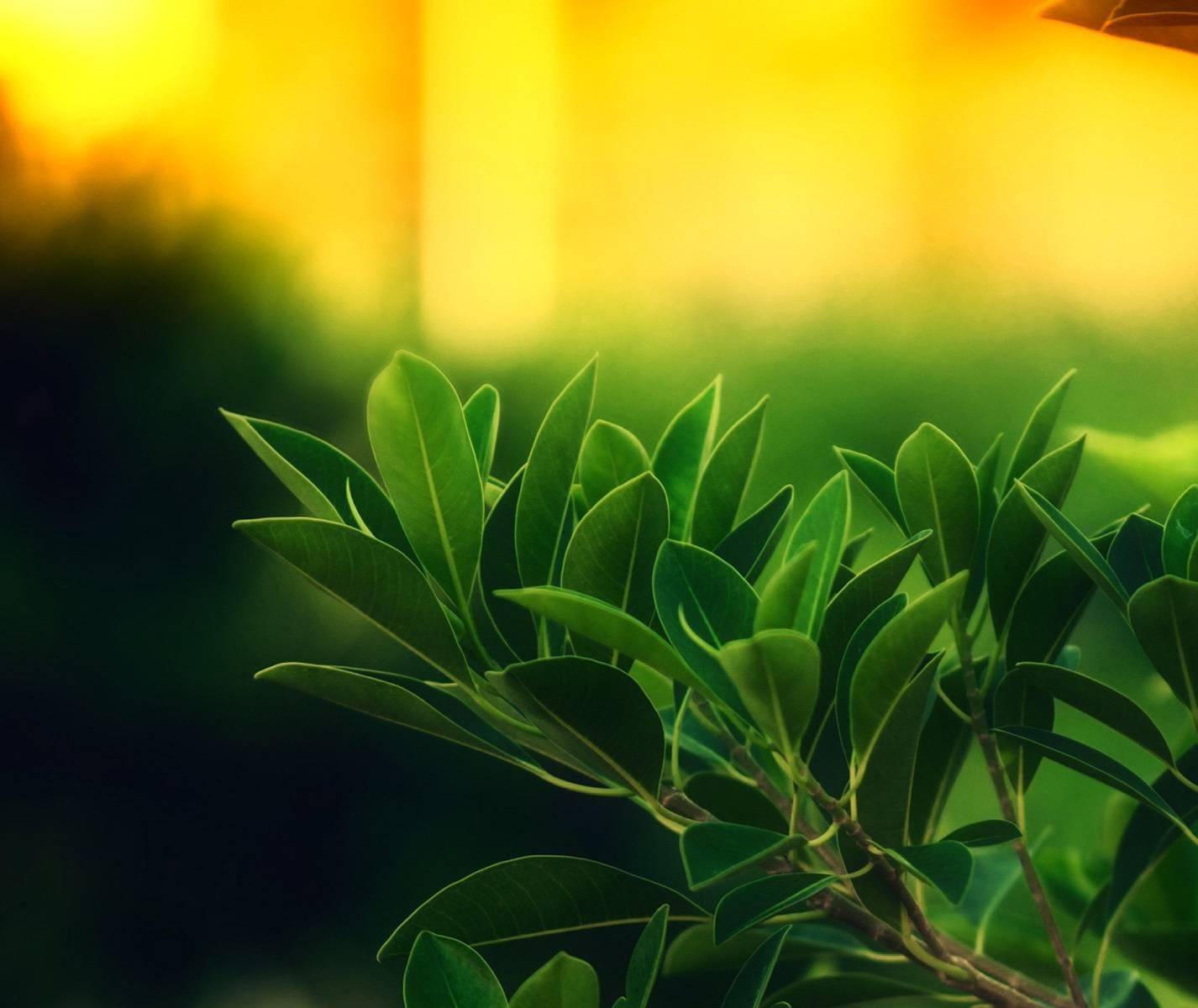 Hd Leaves