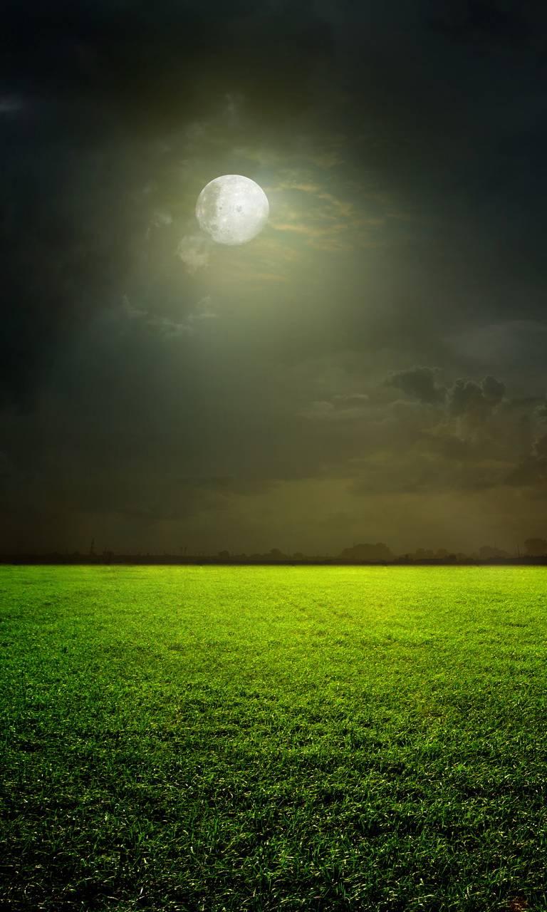 Moonlight Field
