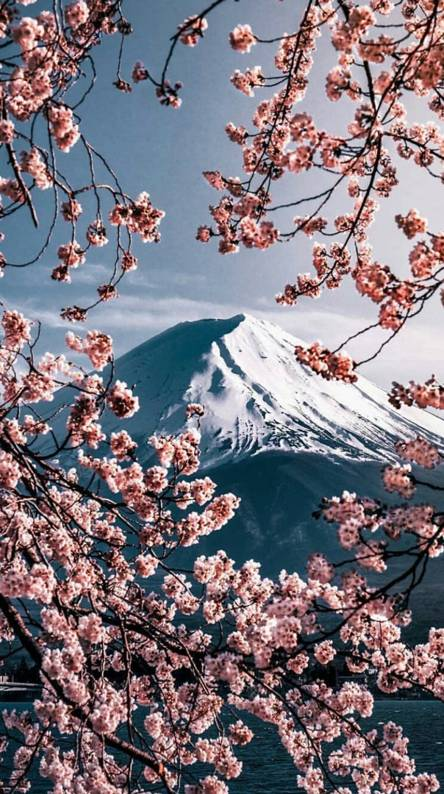 Mount Fuji Wallpapers Free By Zedge