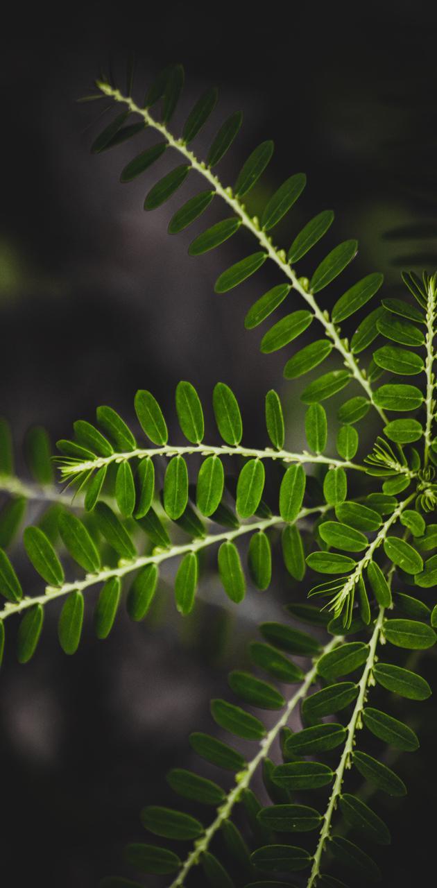 leaf n life