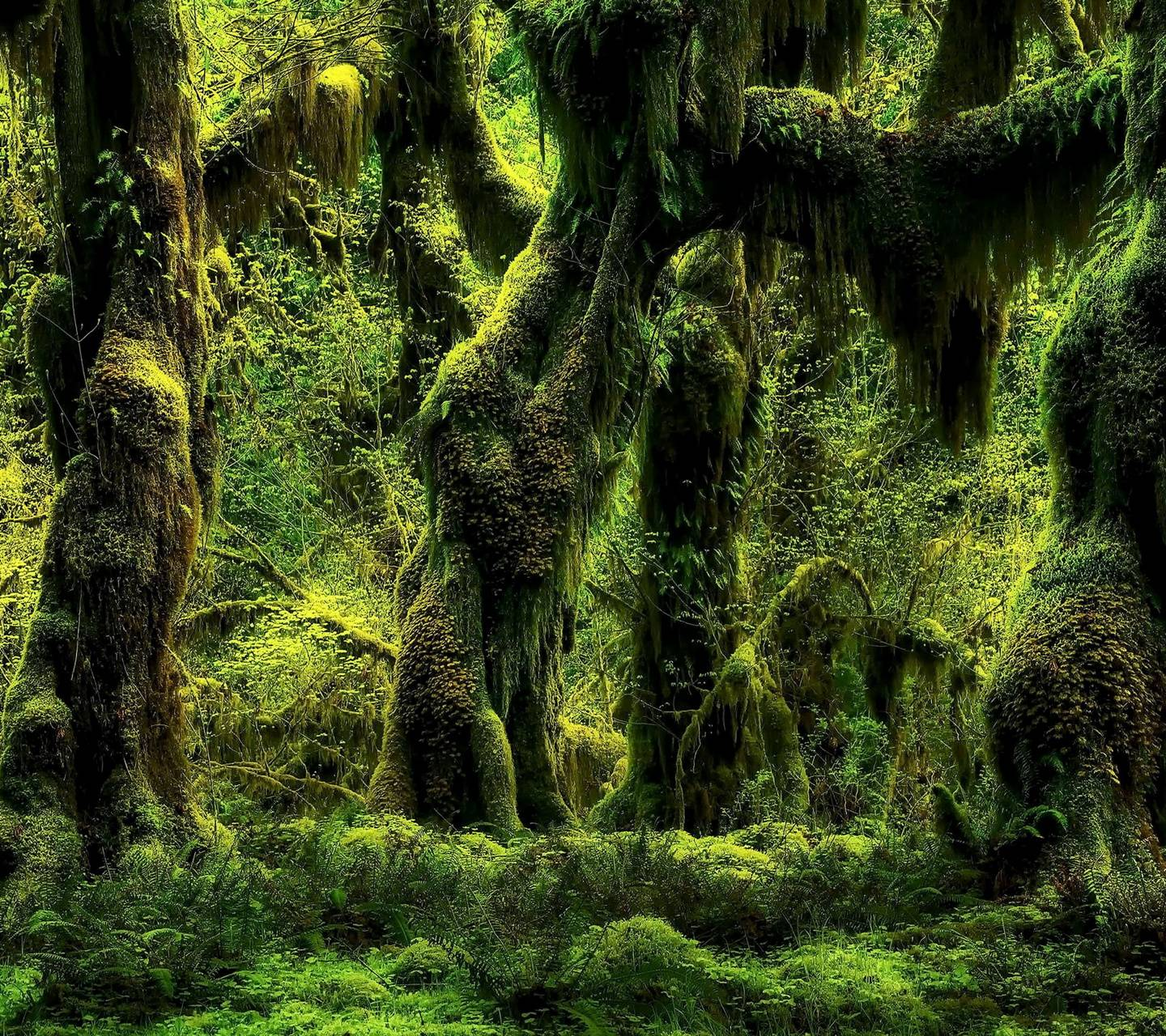 Tropical Forest Wallpaper By Northernowl Eb Free On
