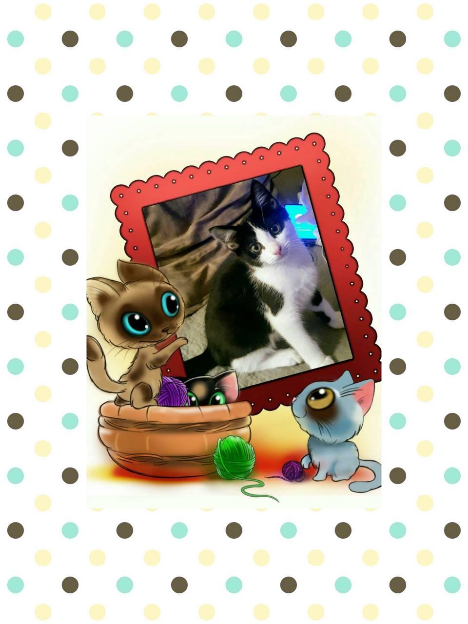 My Cat Chee Chee