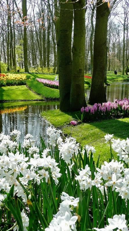 Beautiful garden Wallpapers - Free by ZEDGE™