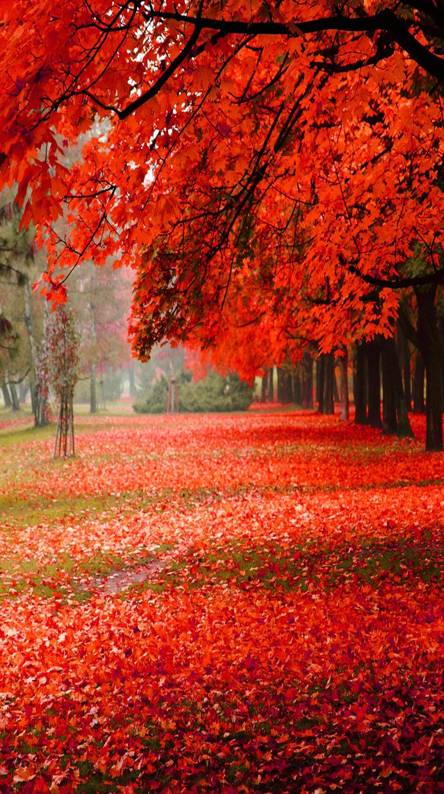 Park autumn red
