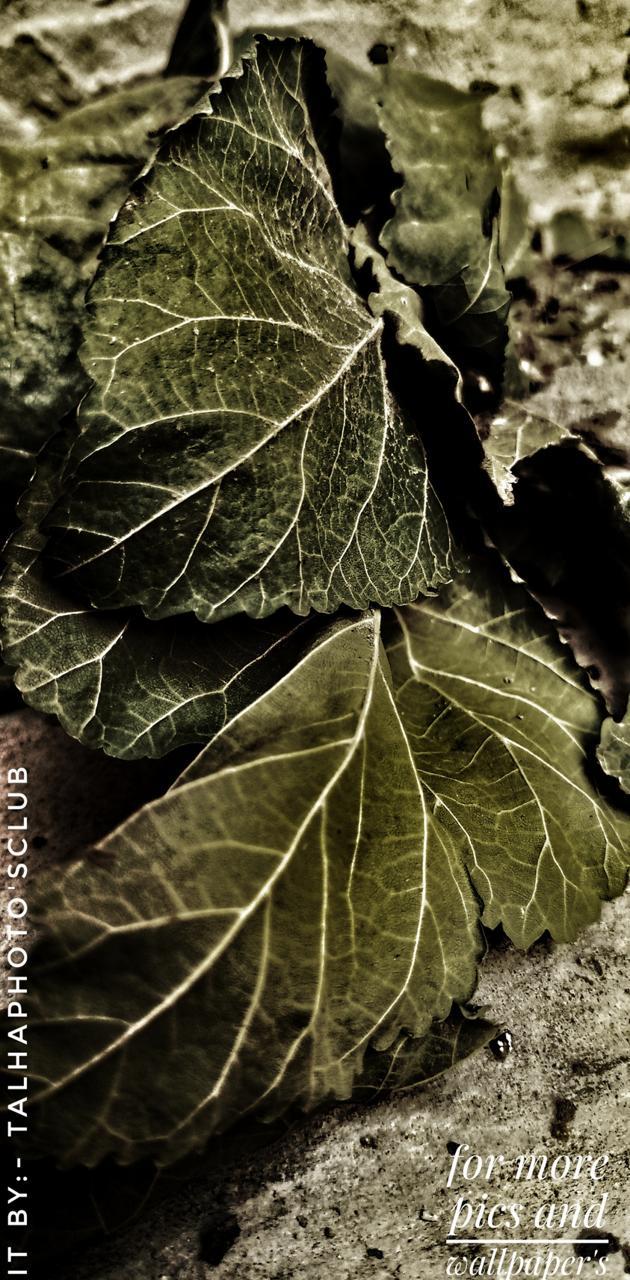 Broken leaf's