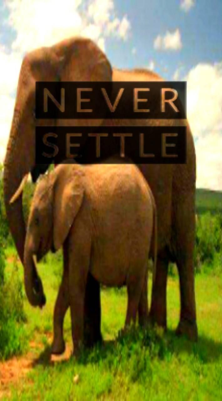 Elephant 2 OnePlus