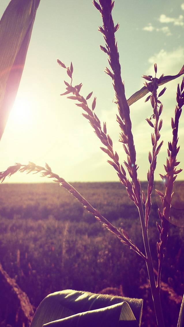 Countryside Hd