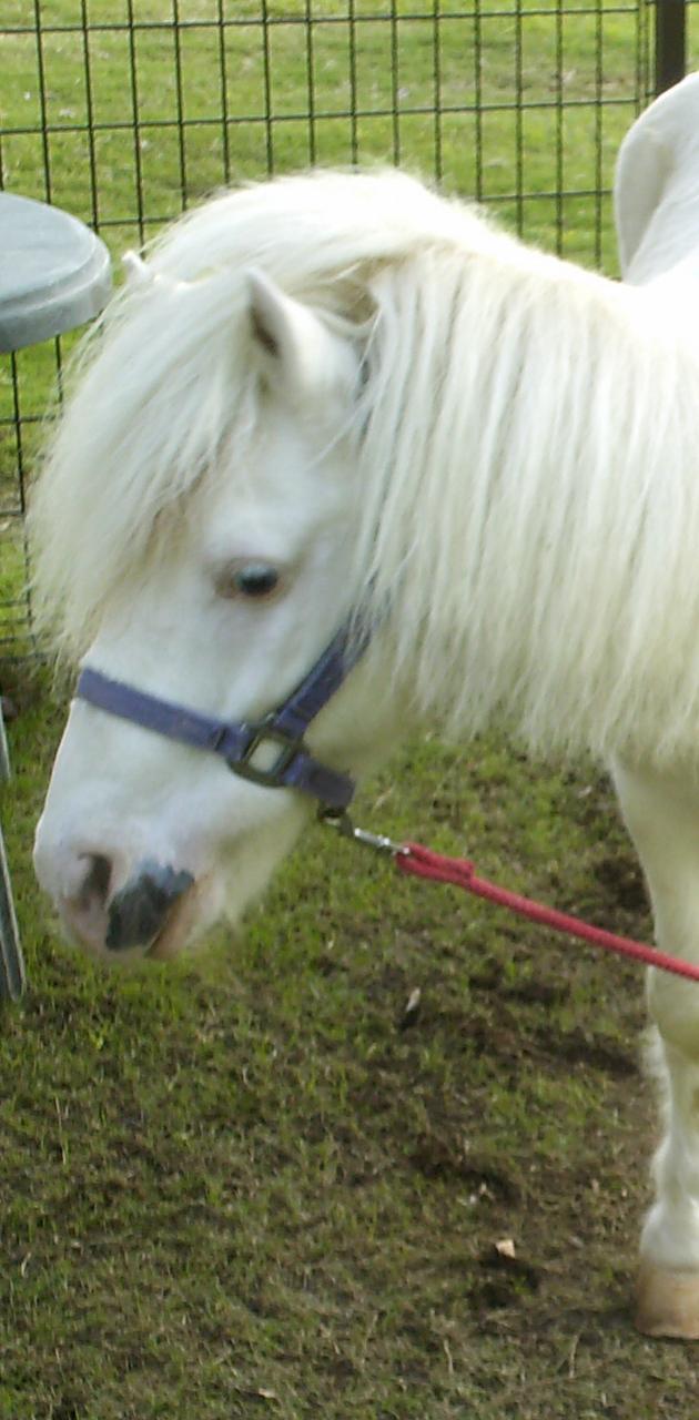 pony white