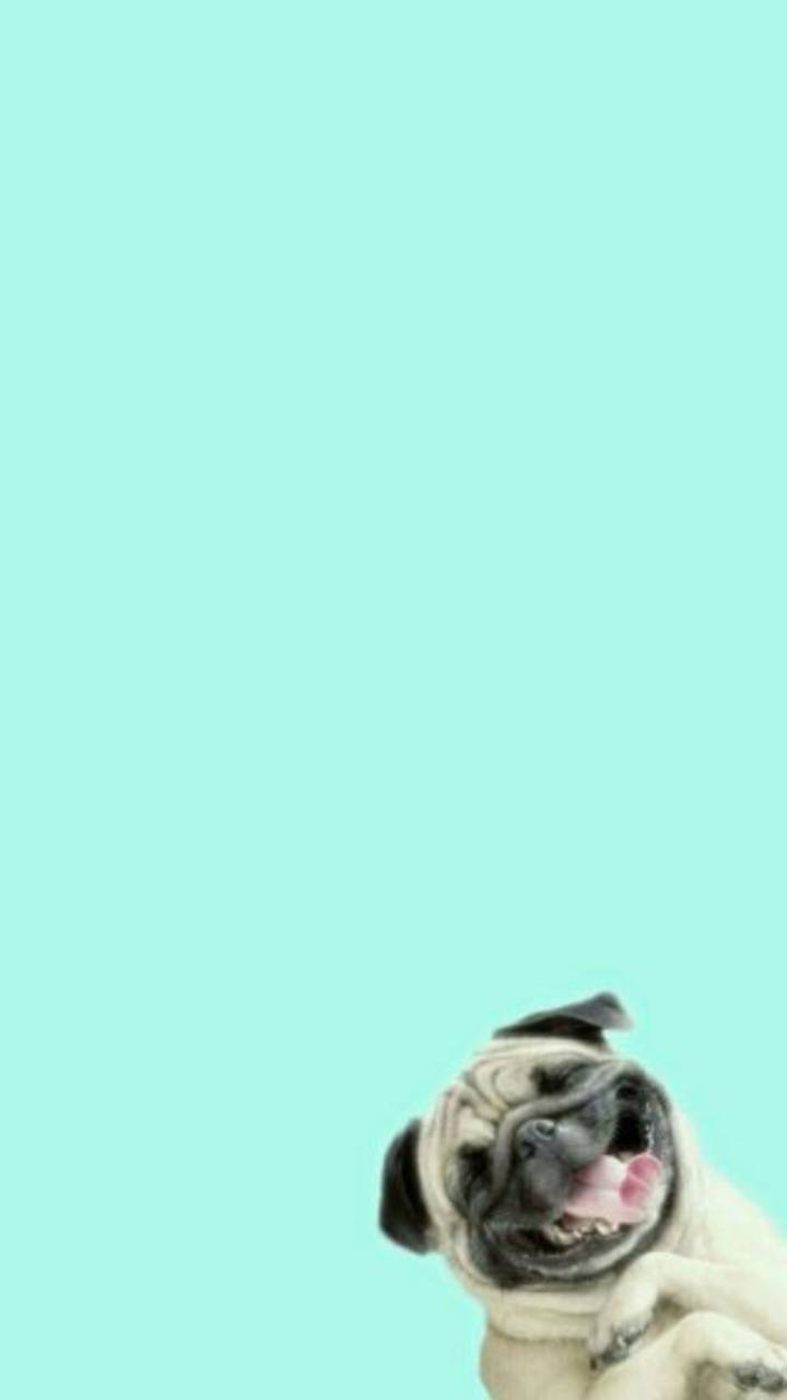 Funny dog wallpaper by Lovely_nature_27