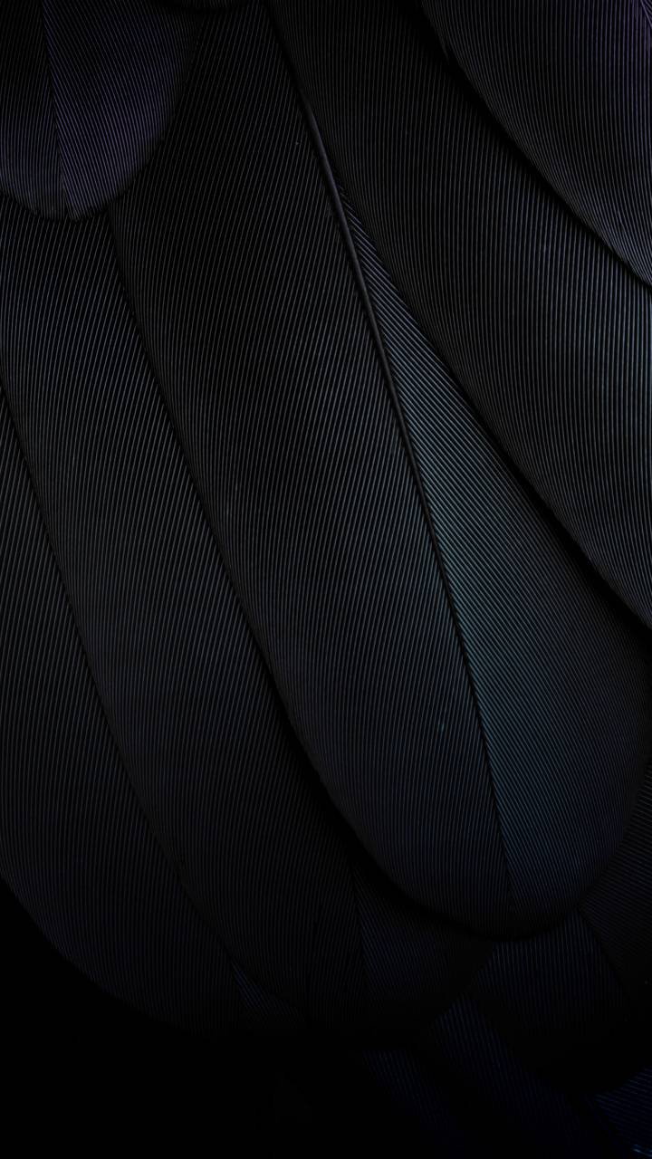 Dark Feathers Wallpaper By Z Studios B1 Free On Zedge