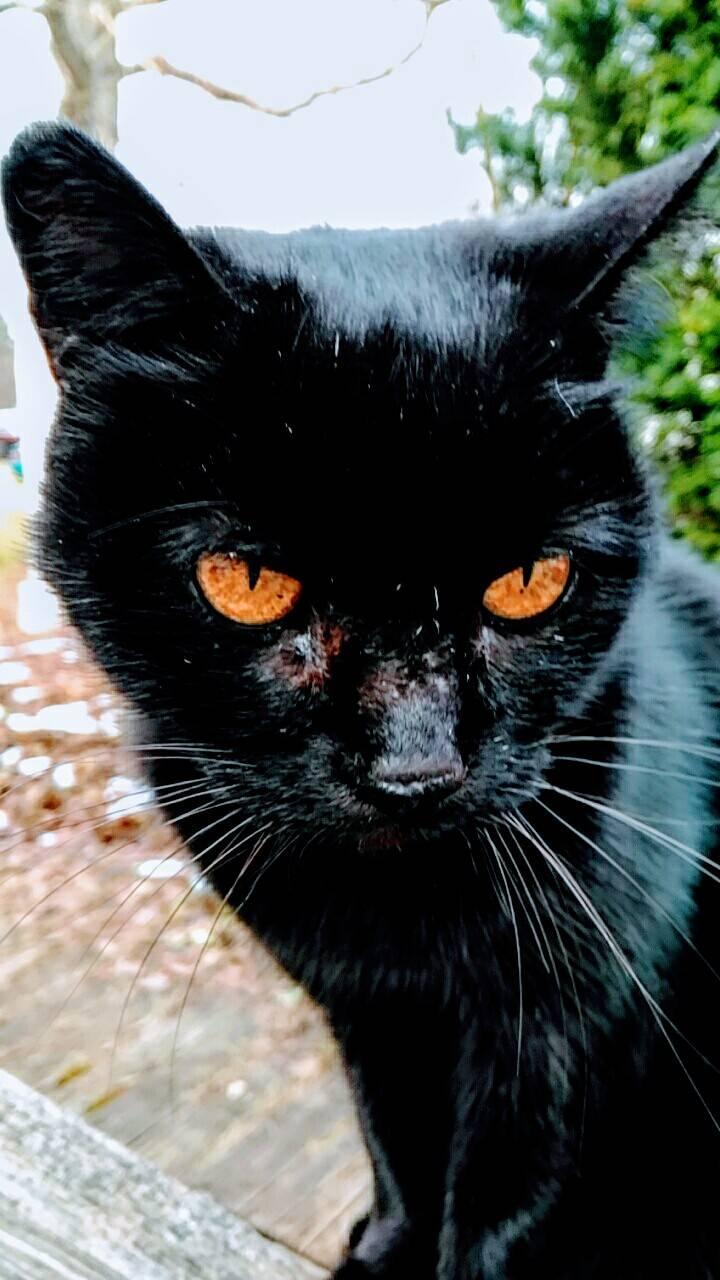 Dark cat