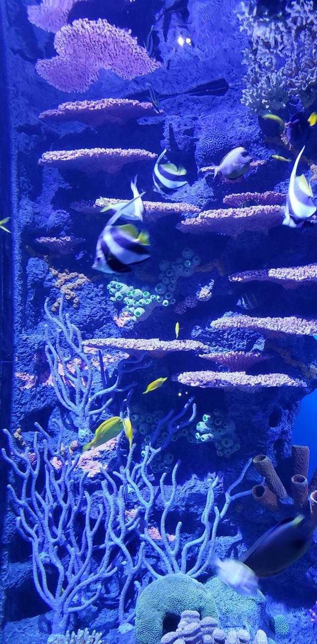 Chatt TN Aquarium