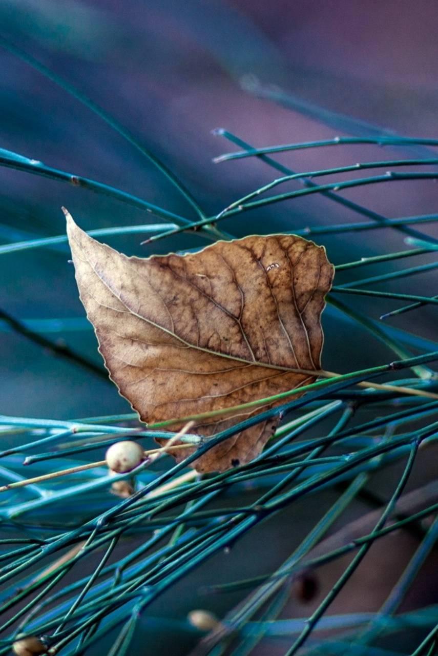 Leaf Nature