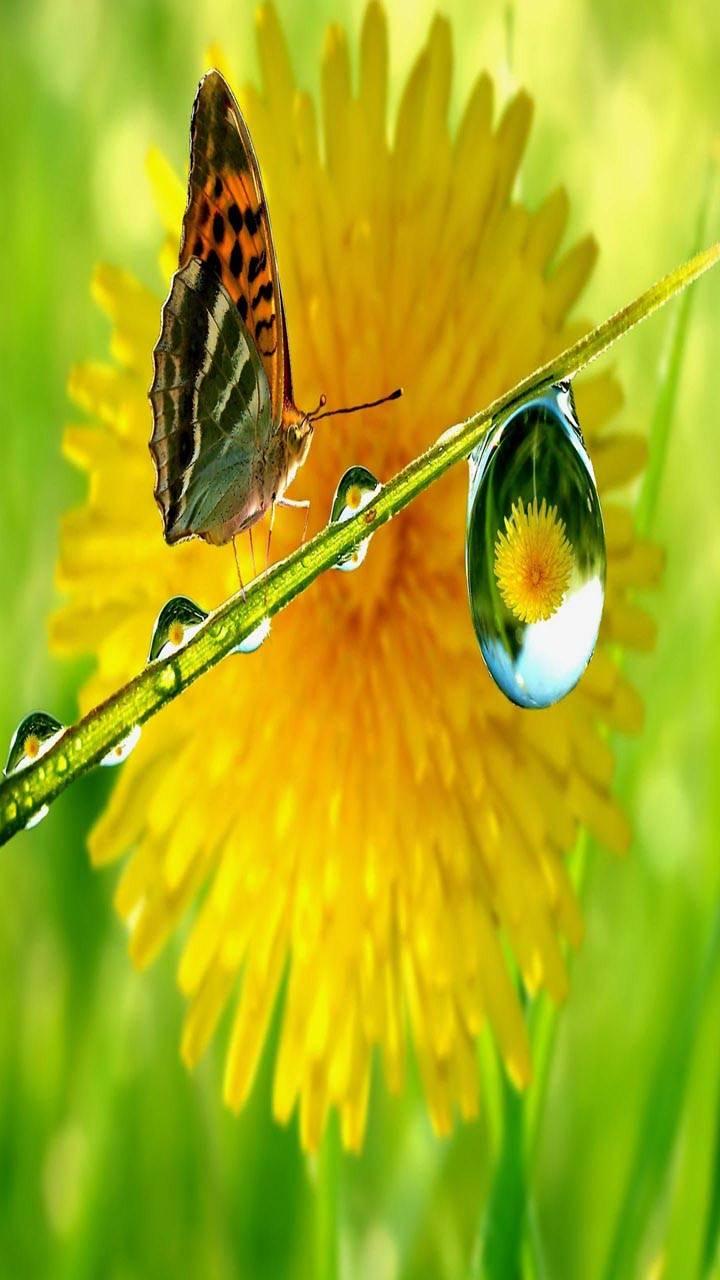Water Drop Flower