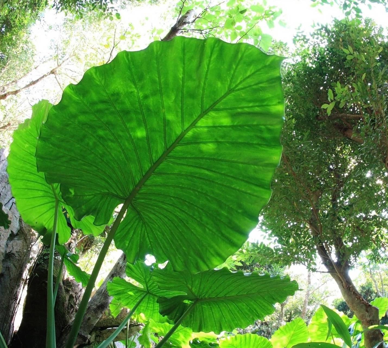 Okinawa Jungle