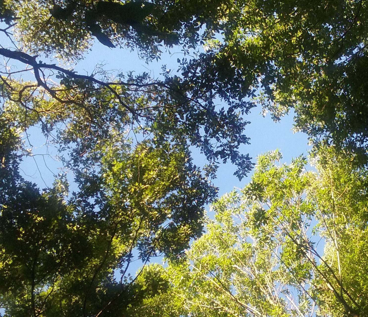 Up trees