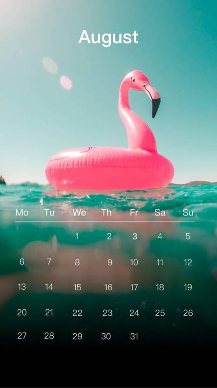 Flamingo August