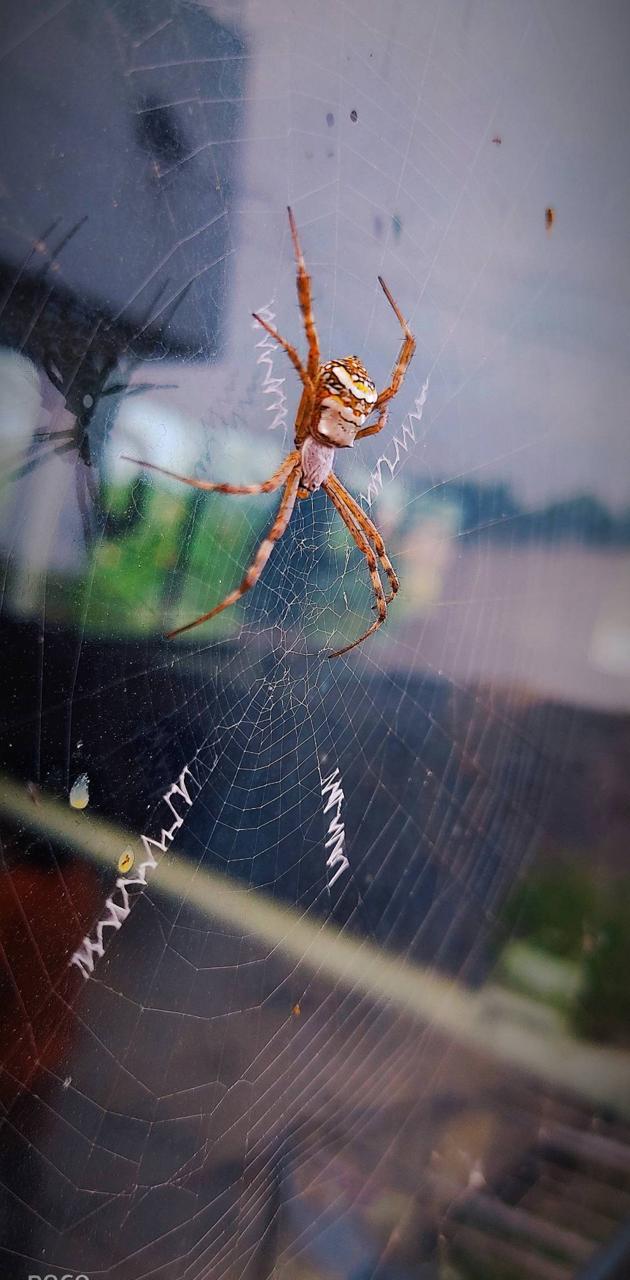 Spider(hemanth)