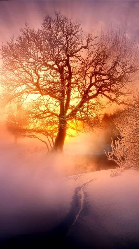fog --------