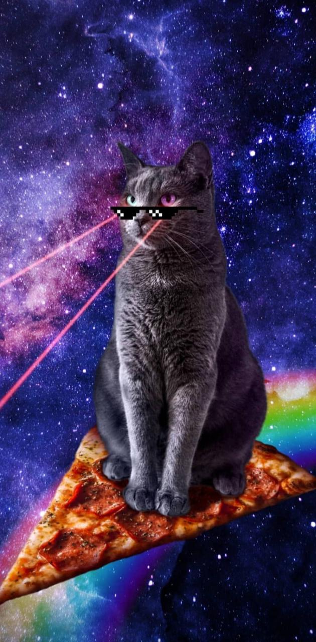 Gato bizarro