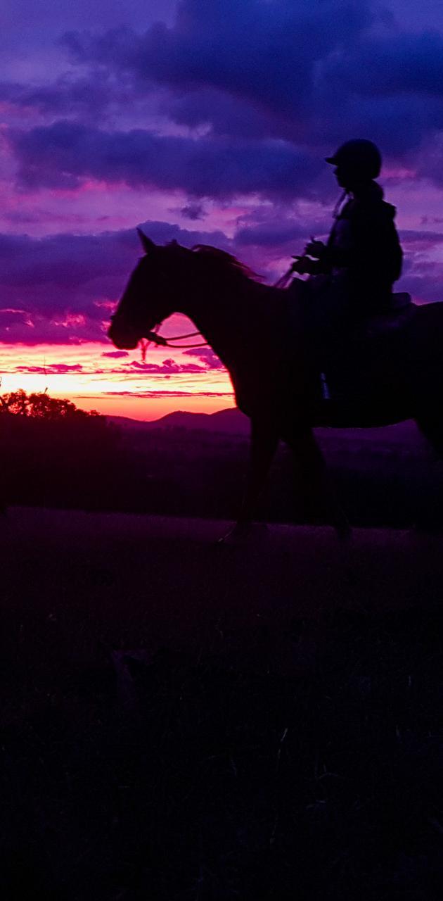 Horse Sunset 2